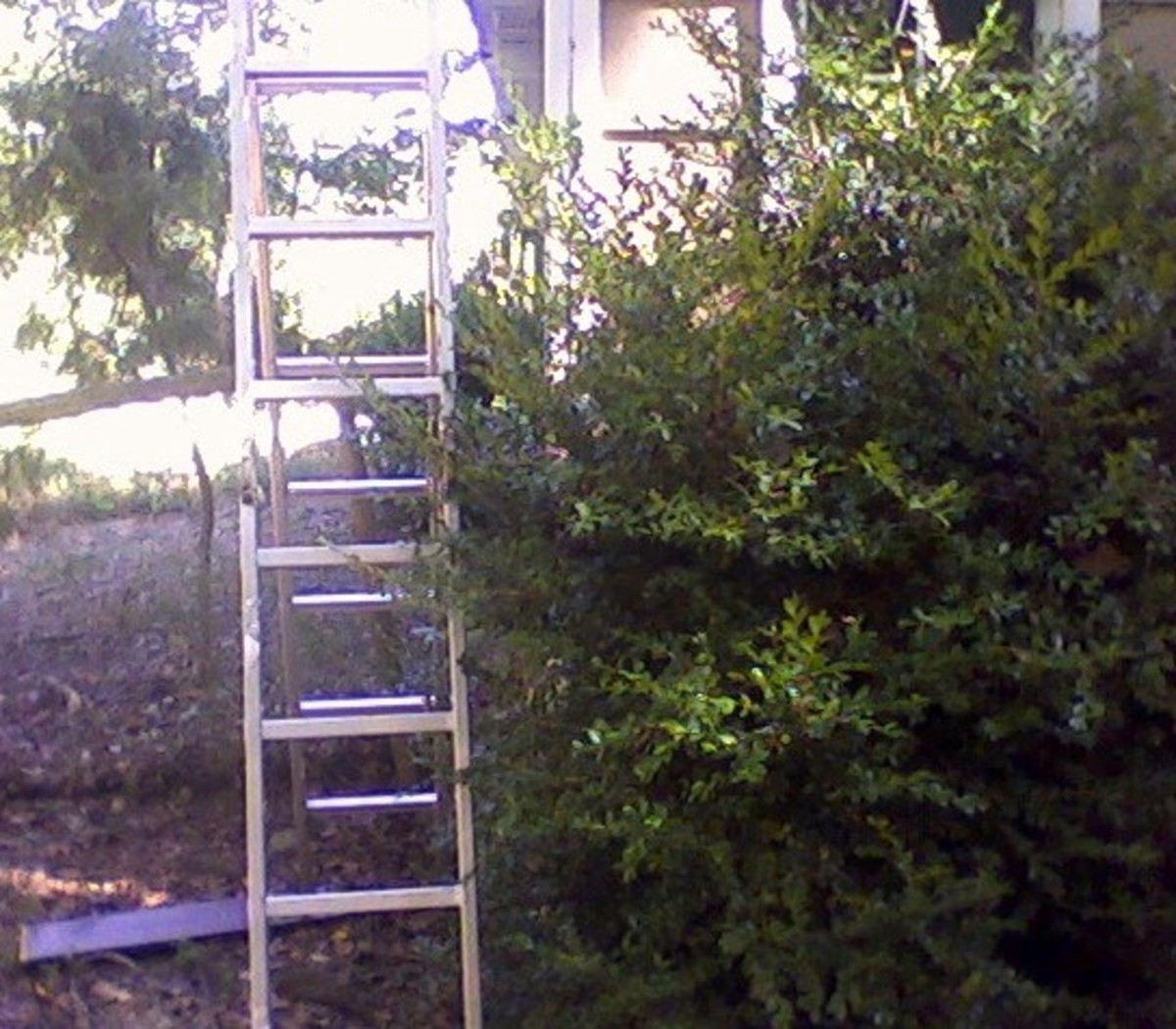 Ladder--RIGHT!