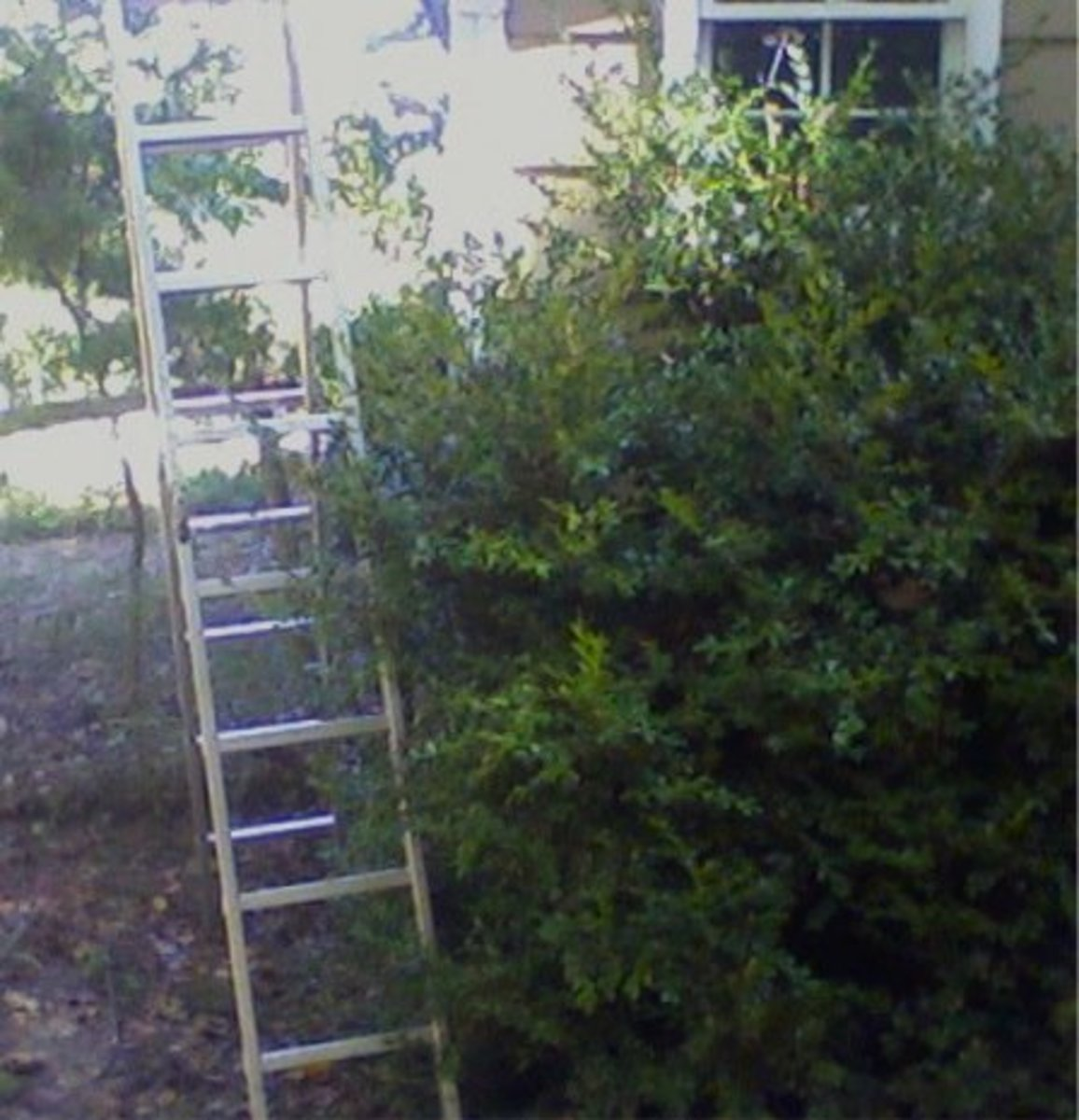 Ladder--WRONG!
