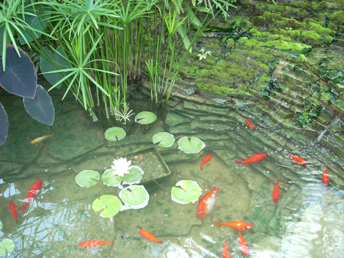 The pond at the Gaylord Texan Resort.