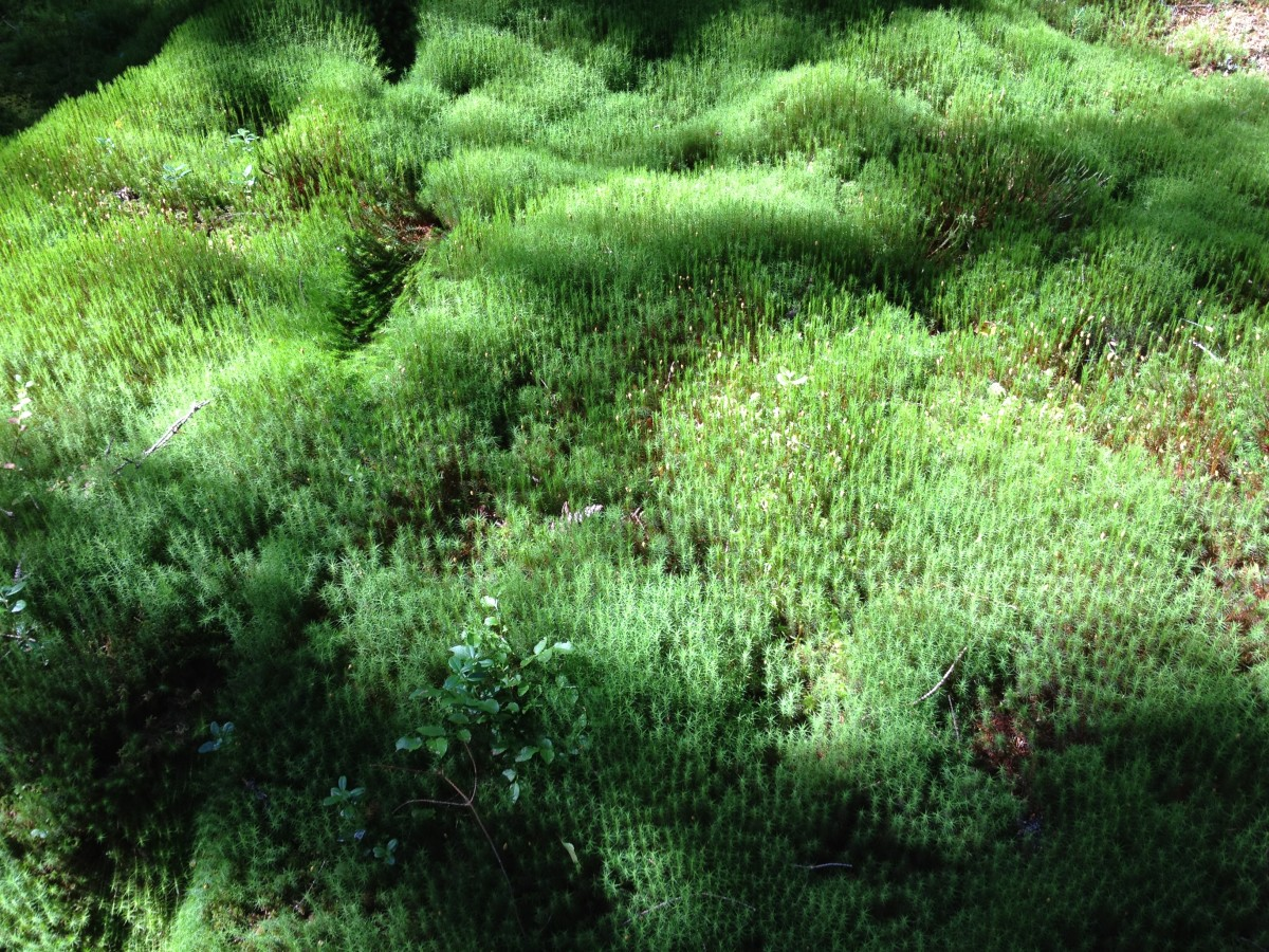 Beautiful moss