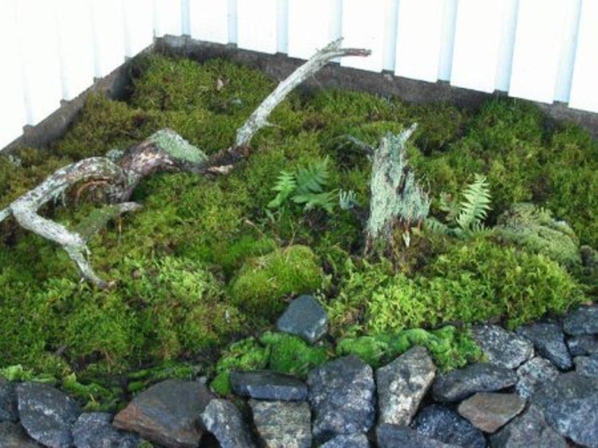 A moss corner!