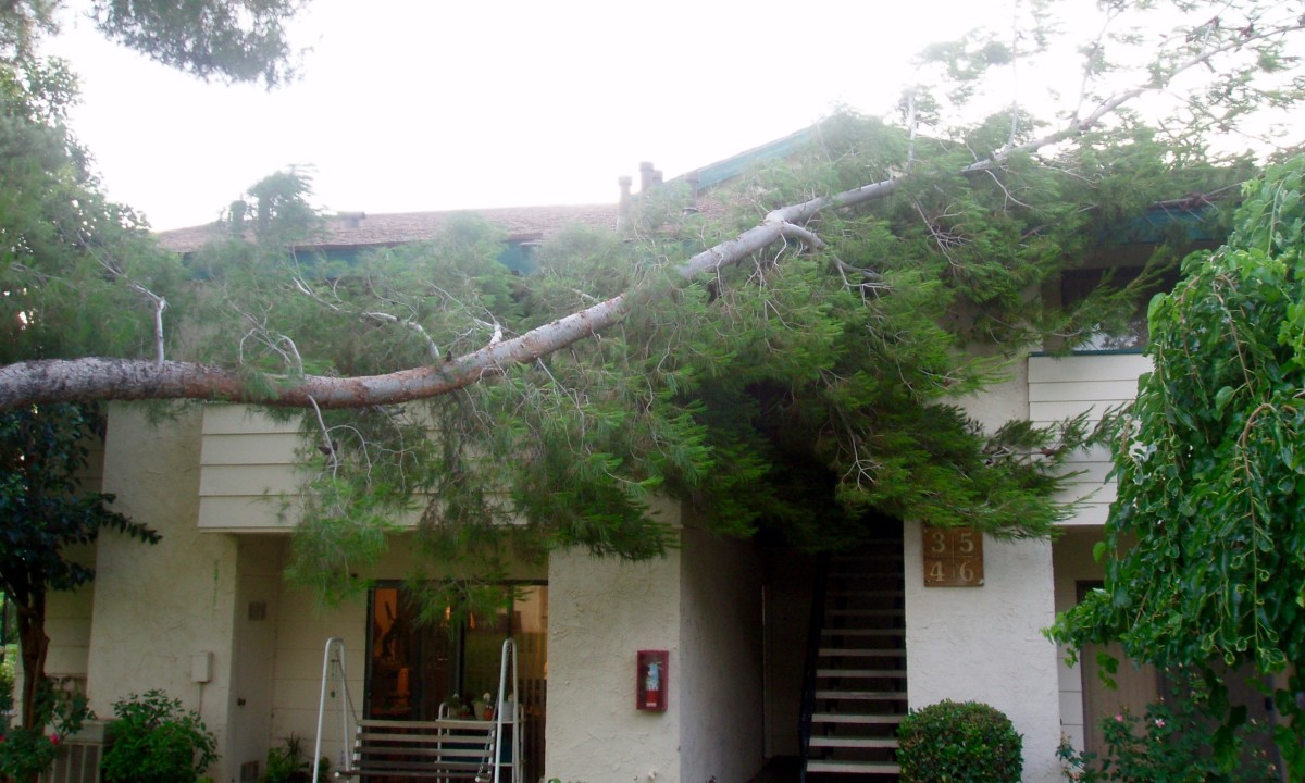 The first limb that broke off fell on top of my condo roof. The second one on the other side of the tree fell on the lawn, taking half the trunk with it.