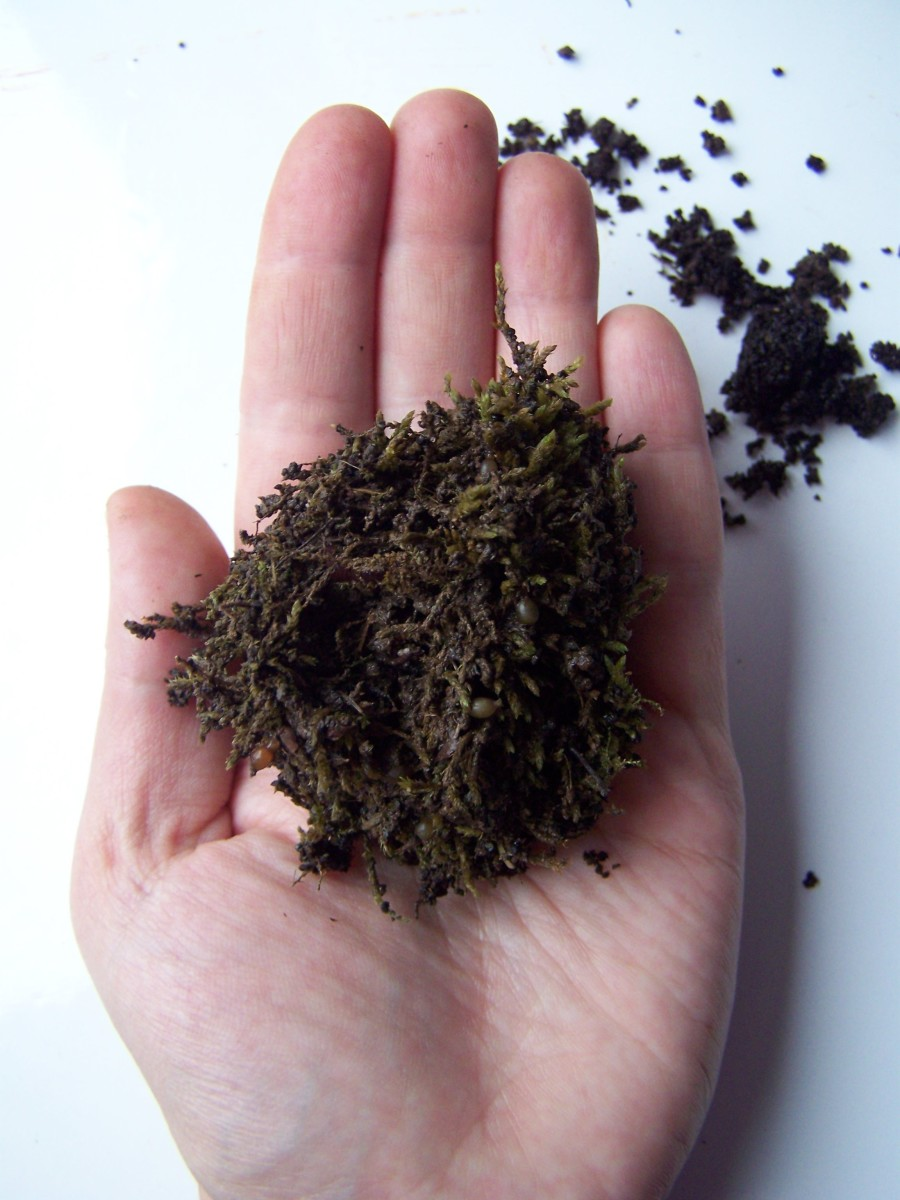 Moss balls are great for composting worms.