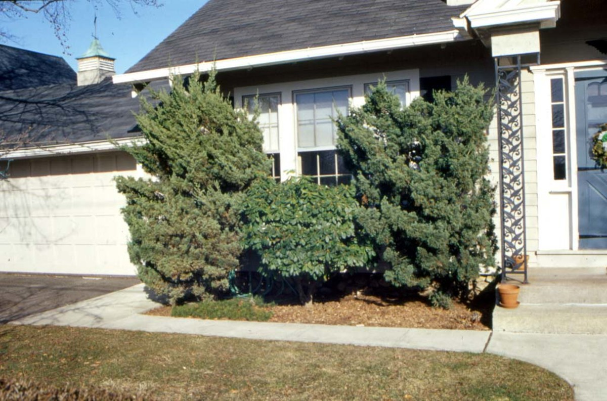Overly large shrubs can hide a home's attributes and increase fire risk.