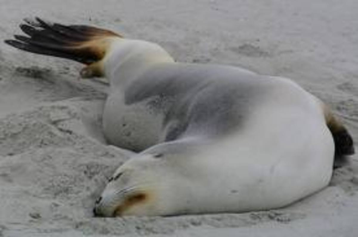 The algae bloom from fertilizer run-off is deadly to sea mammals.