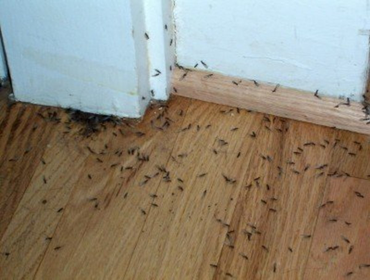 What are the signs of a termite infestation?