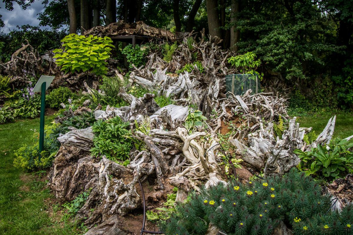 A Beautiful Stumpery