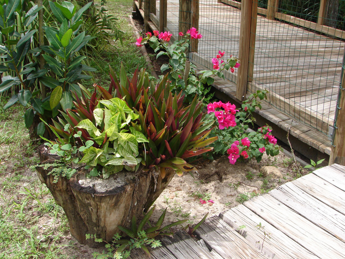 This dead tree stump makes a lovely planter for flowers.