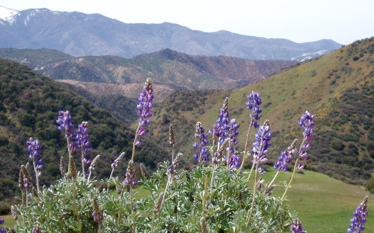 You could grow lupine and other local flowers or cultivars that thrive naturally in your ecological region.