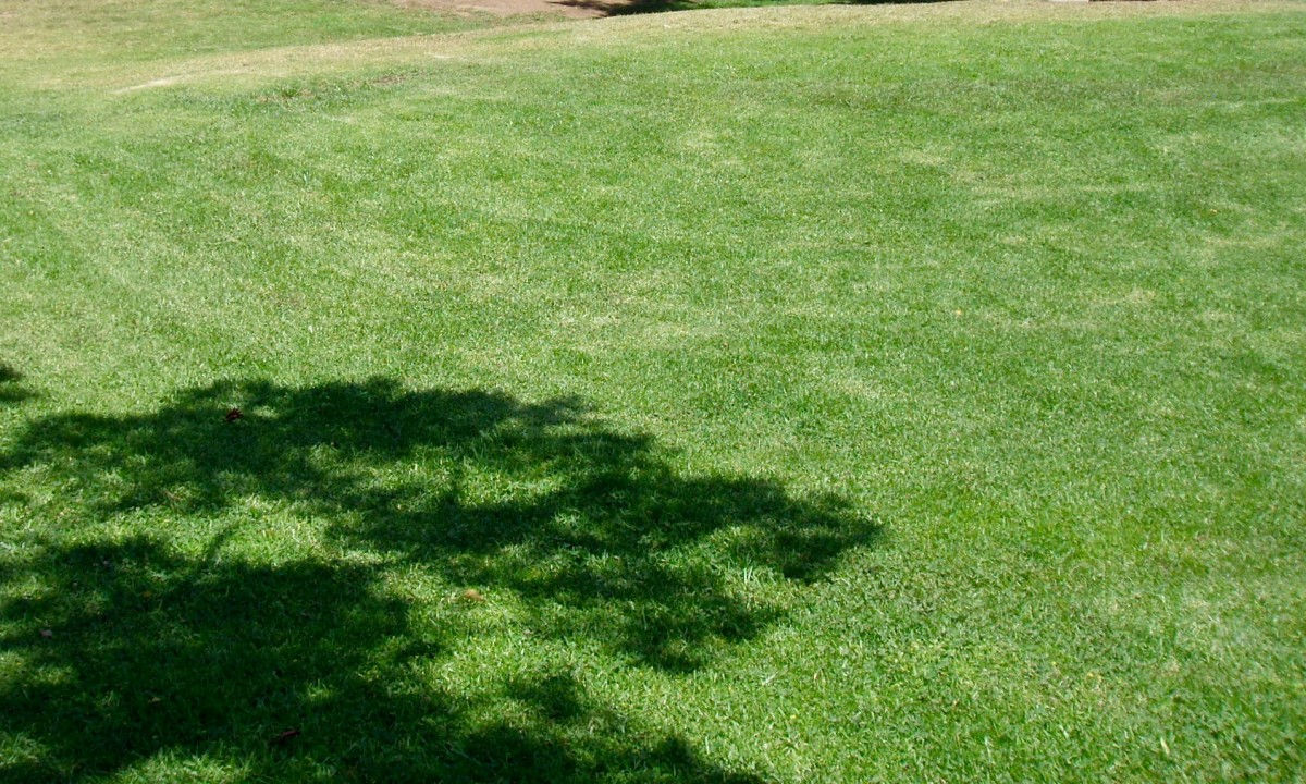 Golf-Course Mimic––typified by wide expanses of green grass and a few shade trees. Homeowners in California like this one, but it's not sustainable in most parts of the state.