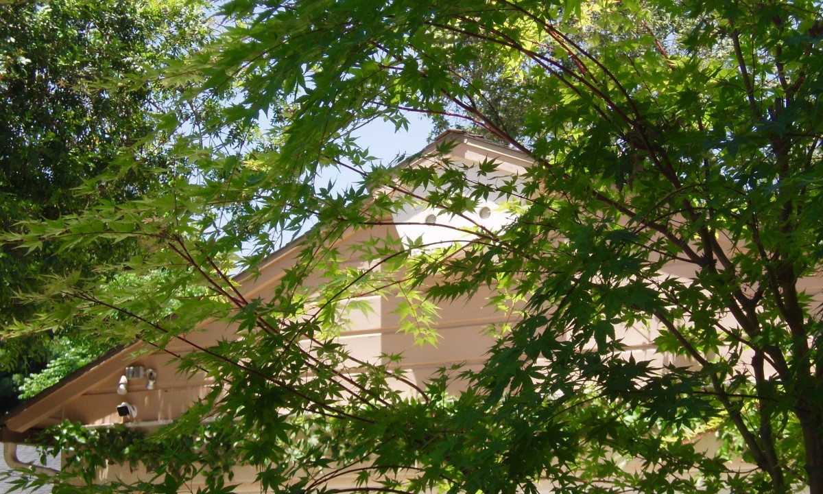 One of the biggest benefits to having a tree in a Southern California yard is the shade it provides during hot summers. This maple tree is planted on the south side, so it shades the house during the hottest part of the day.