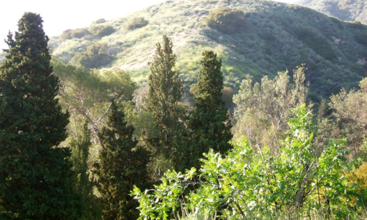 San Gabriel Trail near Pasadena, CA.