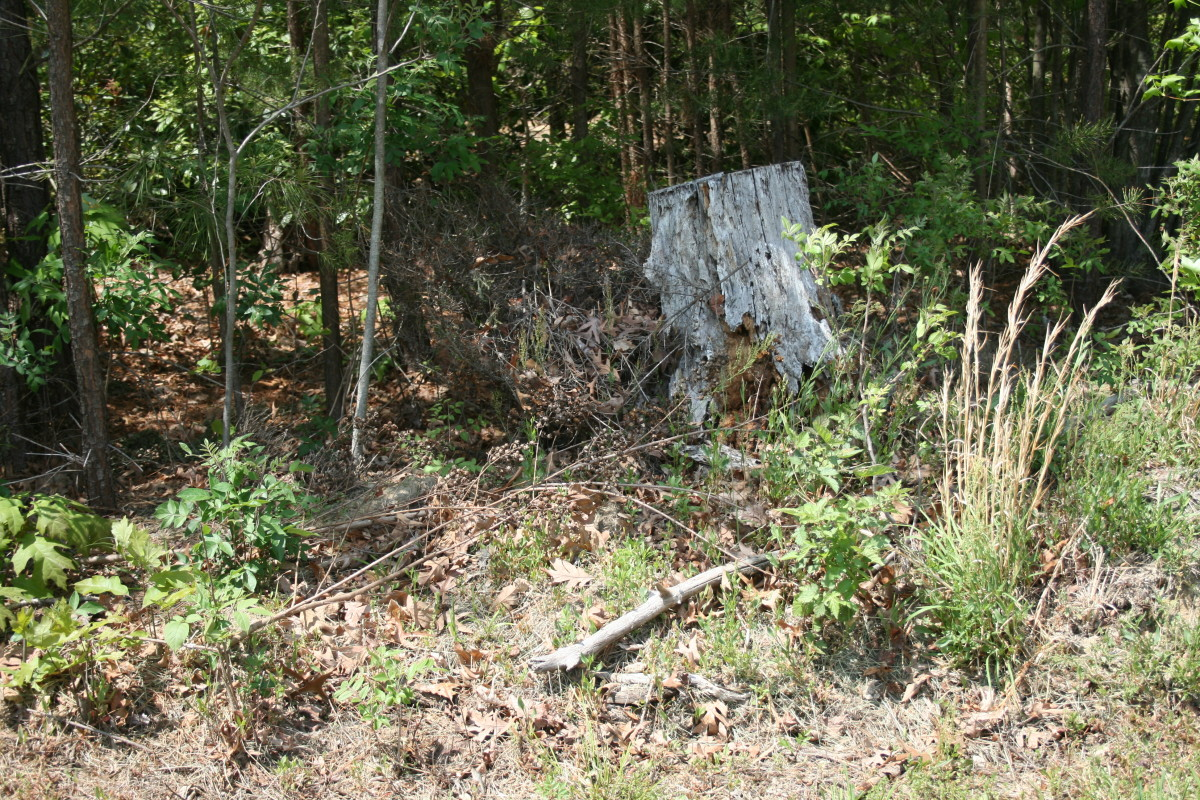 Thanks to yard debris, brush and tall grass, this area at the wood's edge is a haven for ticks.