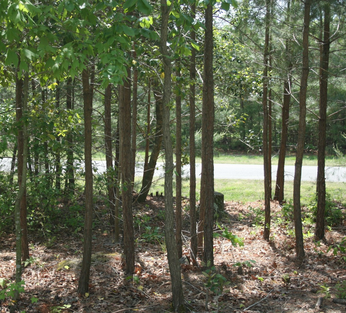 Clearing brush and thinning wooded areas near your house will help keep tick populations down.