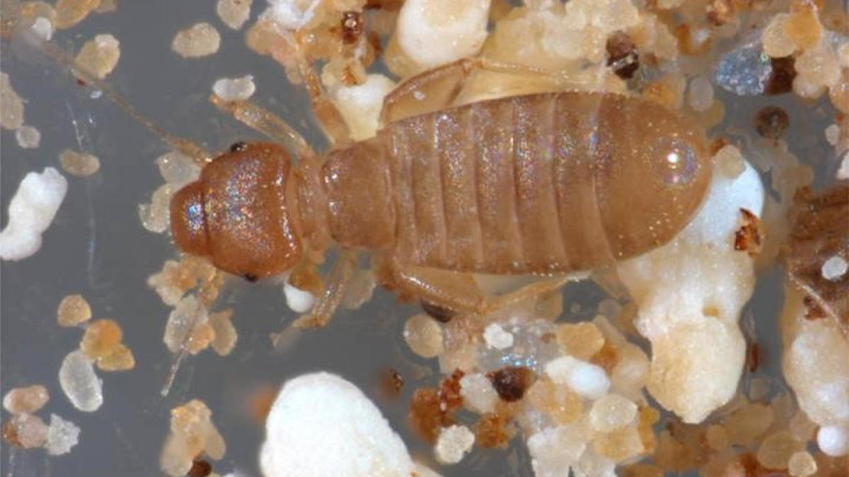 You can find booklice (Liposcelis bostrychophila) around things other than books.  They can find fungi or mold under wallpaper, in furniture, along the sides of windows or on window sills, usually around potted plants.