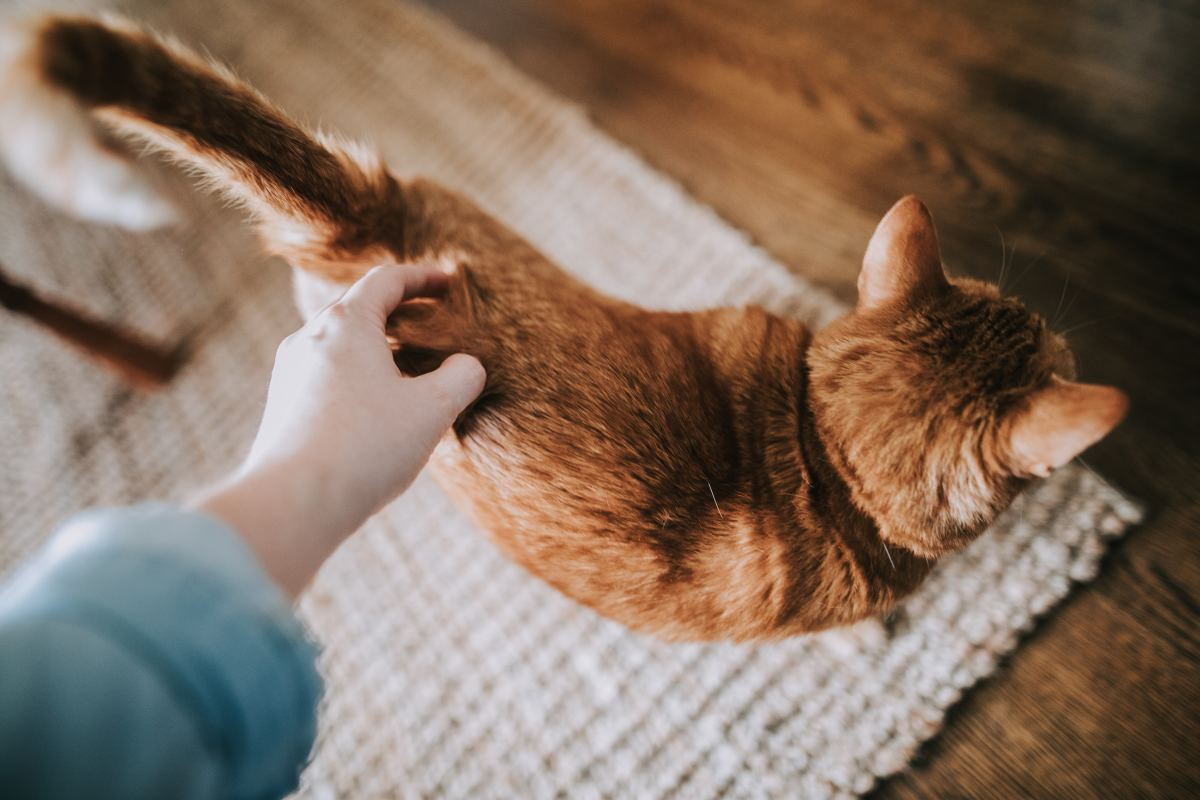 Mark your calendar for when your pet is due for its monthly flea treatment.