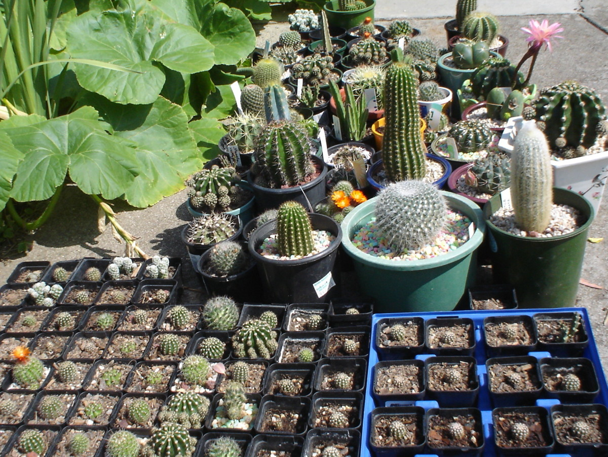Cacti come in interesting shapes and sizes.