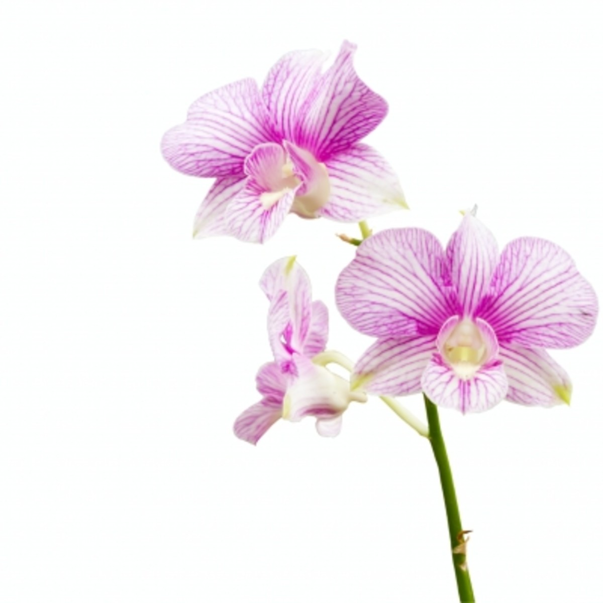 Growing orchids isn't that difficult, as long as you get the correct ratio of water and light.