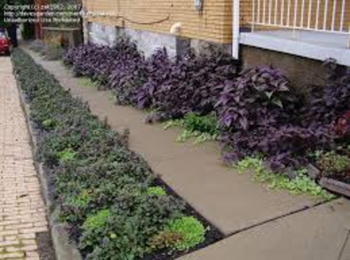 shade-gardening-in-rocky-soil