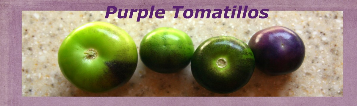 Purple tomatillos can be eaten when green for a traditional, tangy flavor. When fully ripe, the purple tomatillo will darken to a full-purple color and will develop a sweeter flavor.