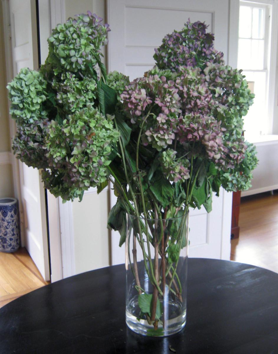 Hydrangeas in a tall glass vase.
