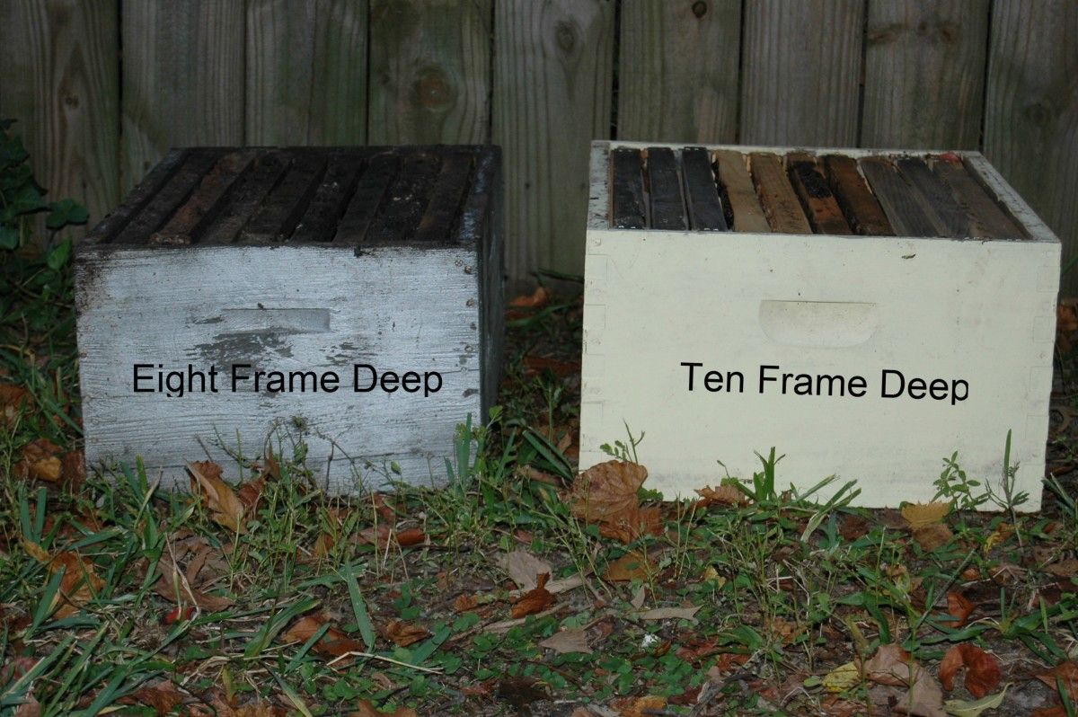 Eight Frame Deep Box Next To a Ten Frame Deep
