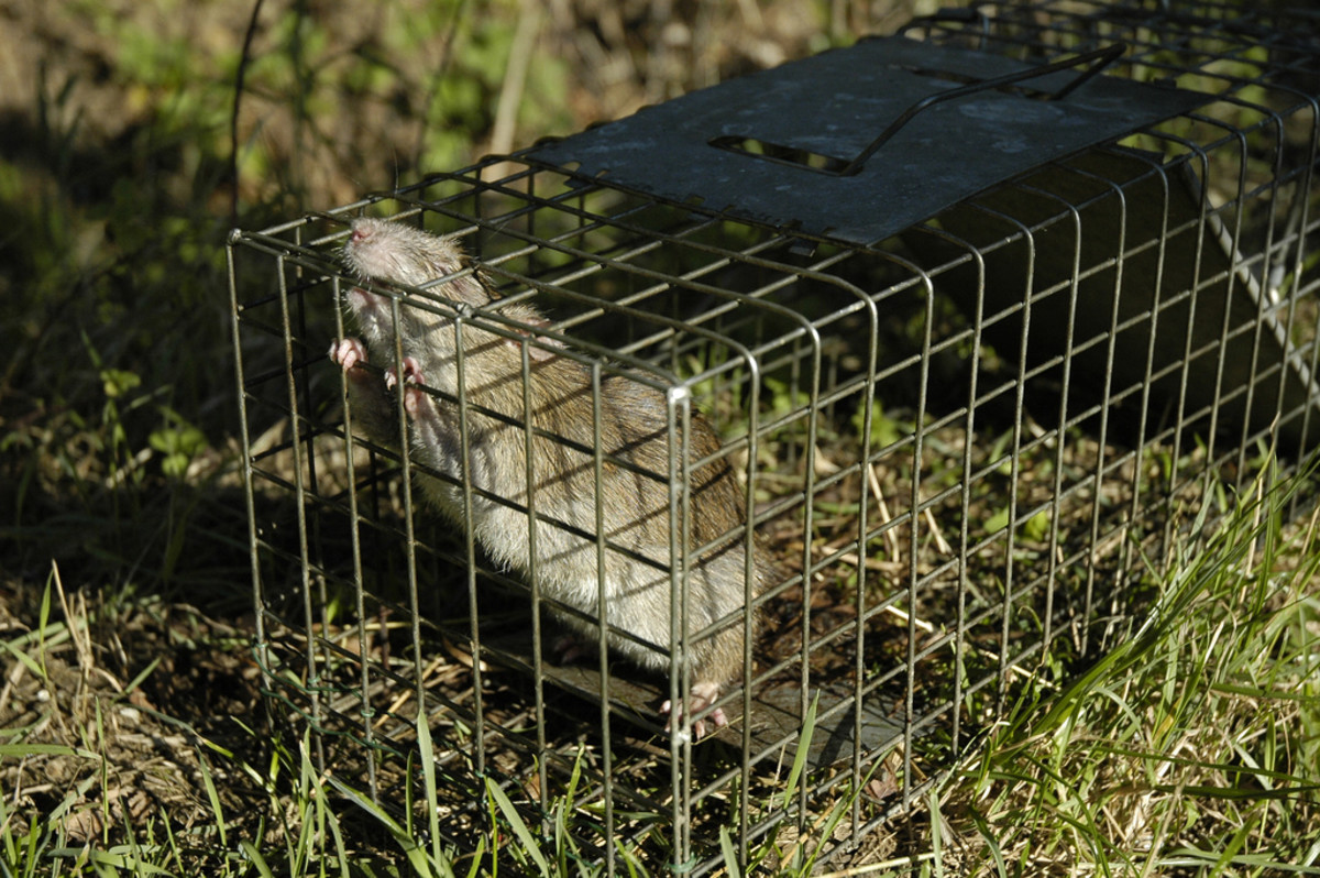 Humane Mousetraps