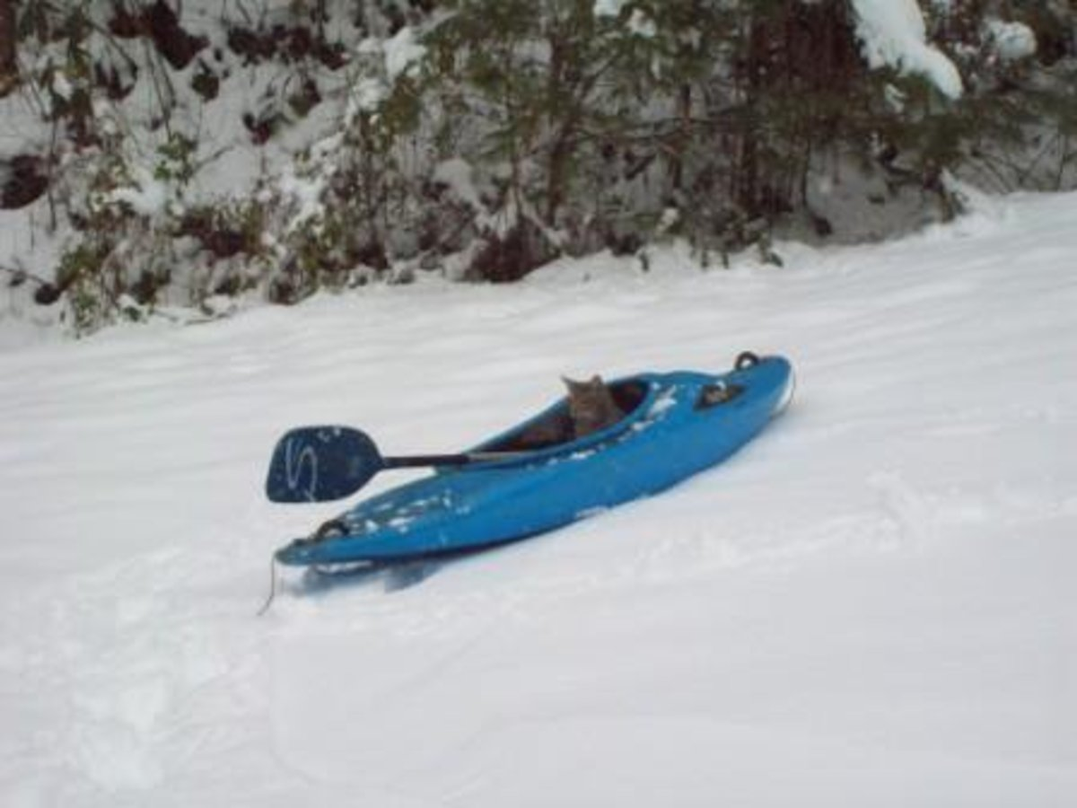 "This is the part about ""rolling with it"".  We took out our kayaks and went ""kayaking"" in the snow.  Meanwhile, our cat wanted to join in on the fun."