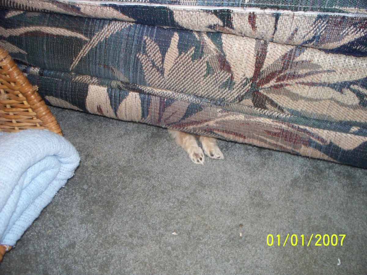 Puppies work best to clear out the hidden dust bunnies from under sofas, or couches.