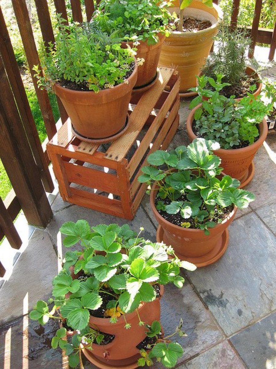 Outdoor container plants are less likely to grow mold, but it does happen. The plant likely needs less water and more sun and wind.