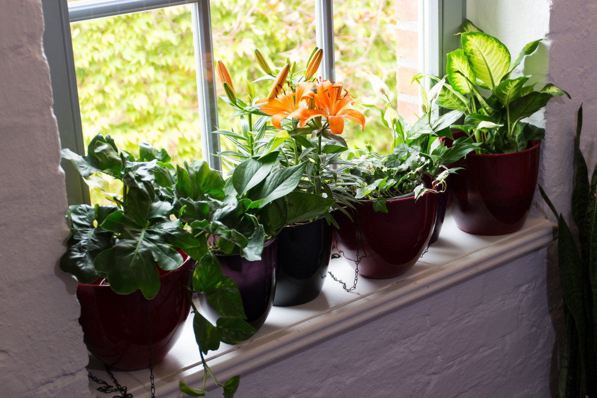 Potted plants are prone to mold. Impermeable plastic containers and pots without holes retain moisture.