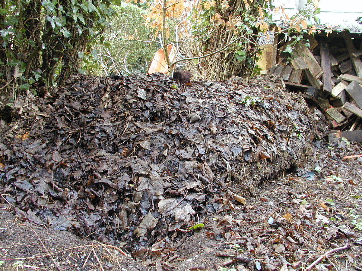 No Fancy Compost Bin, Just a Pile!