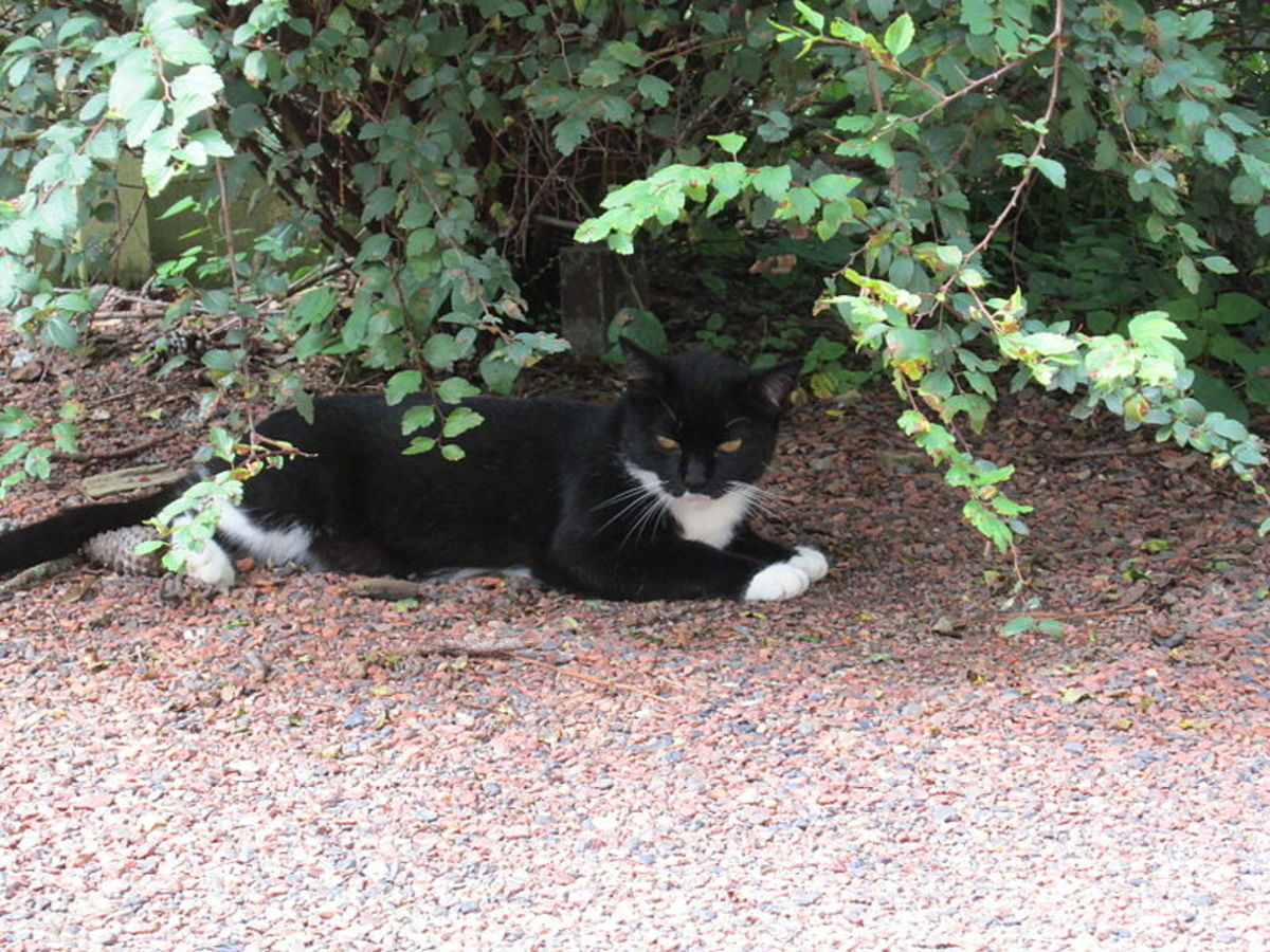 How Do I Keep Cats Away From My Yard And Off My Property Dengarden Home And Garden