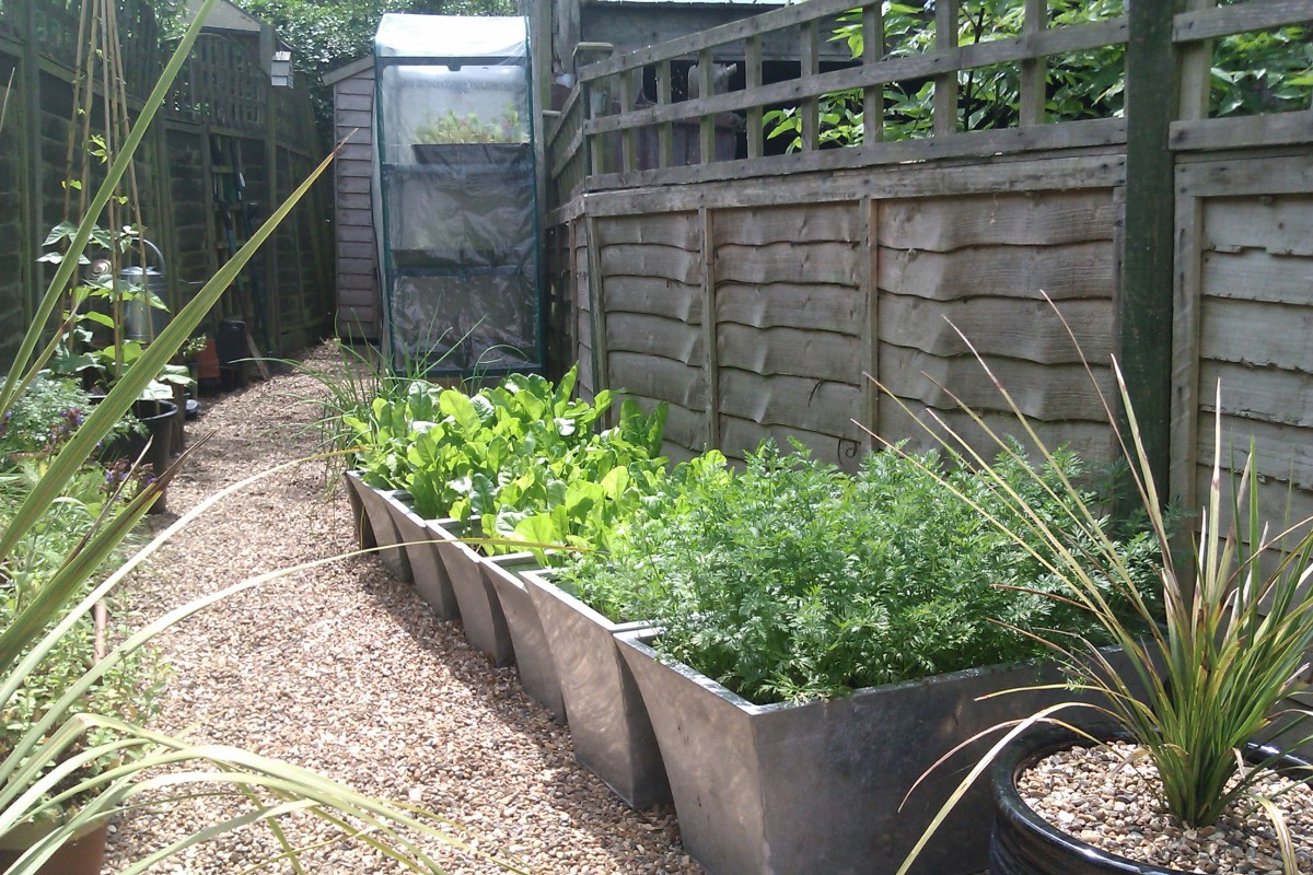 Vegetables in containers and mini greenhouse