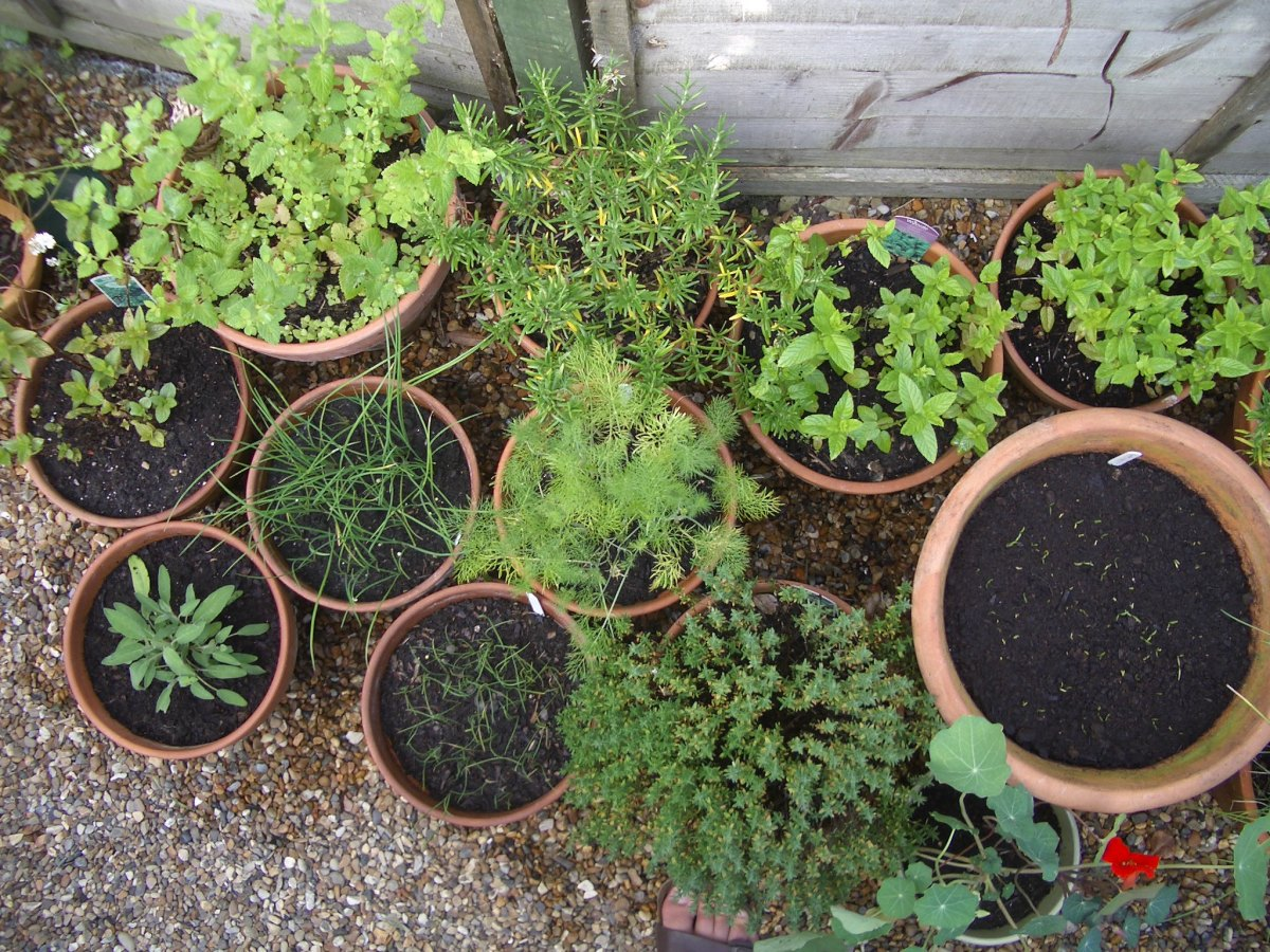Herbs in assorted terracotta pots