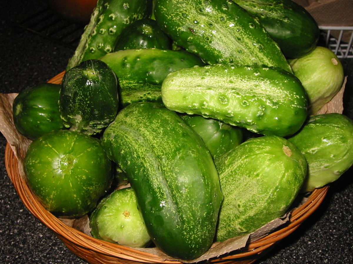 These are perfect pickling size.