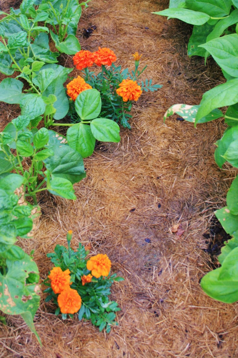 Adding old potting soil to your vegetable garden is one way to reuse it.