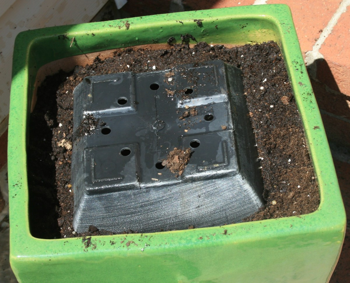 Another way to keep costs down? Use less potting mix by adding an overturned plastic nursery pot to your container.