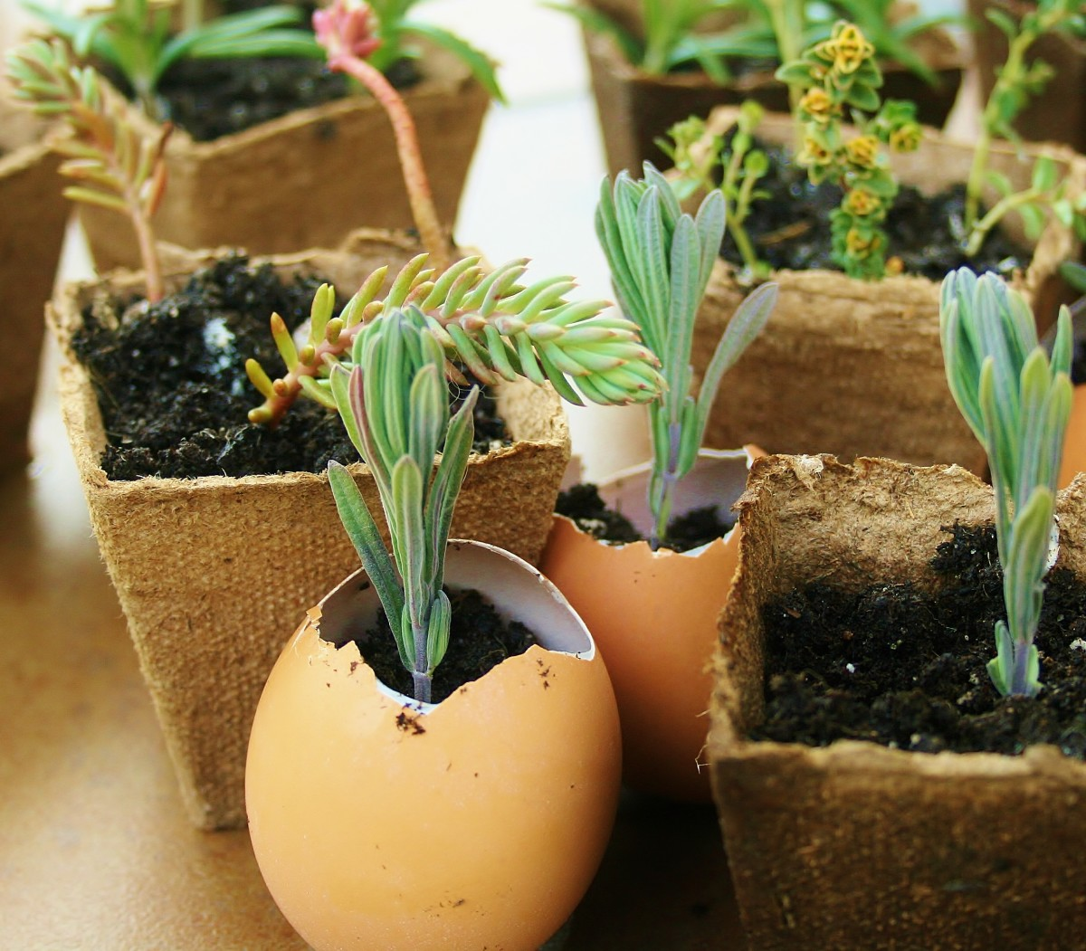 Reusing old soil has risks, but you can limit them by following a few basic guidelines.