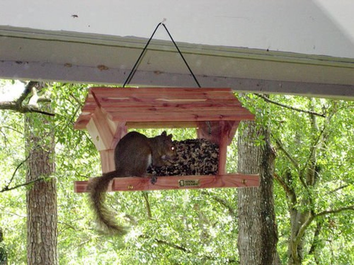 The main problem with flat seed trays. They make such comfie perches for squirrels.