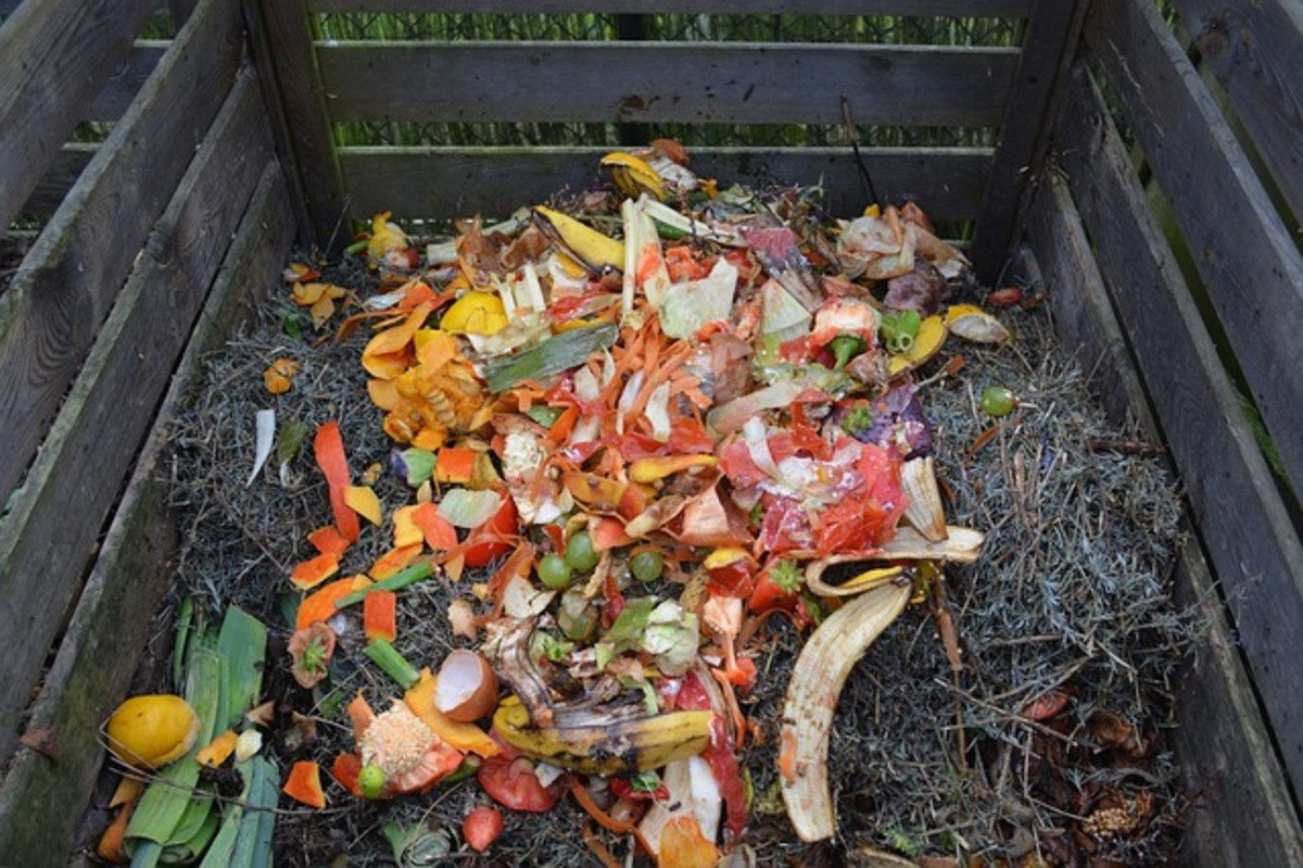 Food scraps in a compost pile.