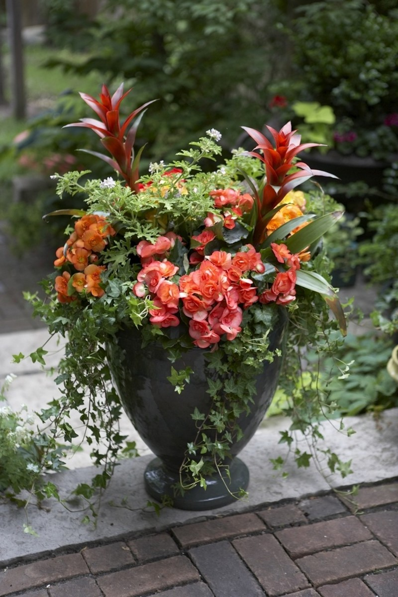 "Unleash your creativity with easy container gardens using the popular concept of the ""thriller, filler, and spiller"" combo."