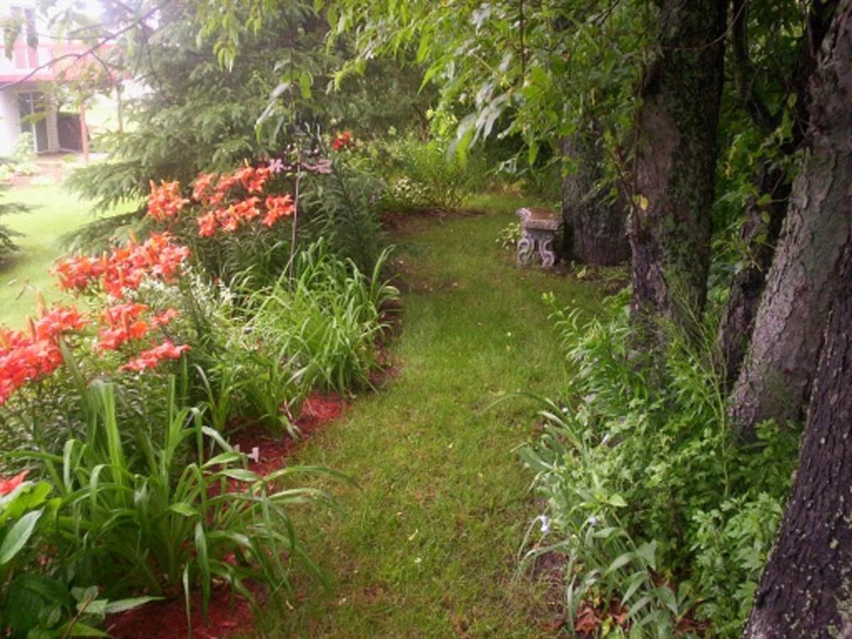 A Perennial Shade Garden