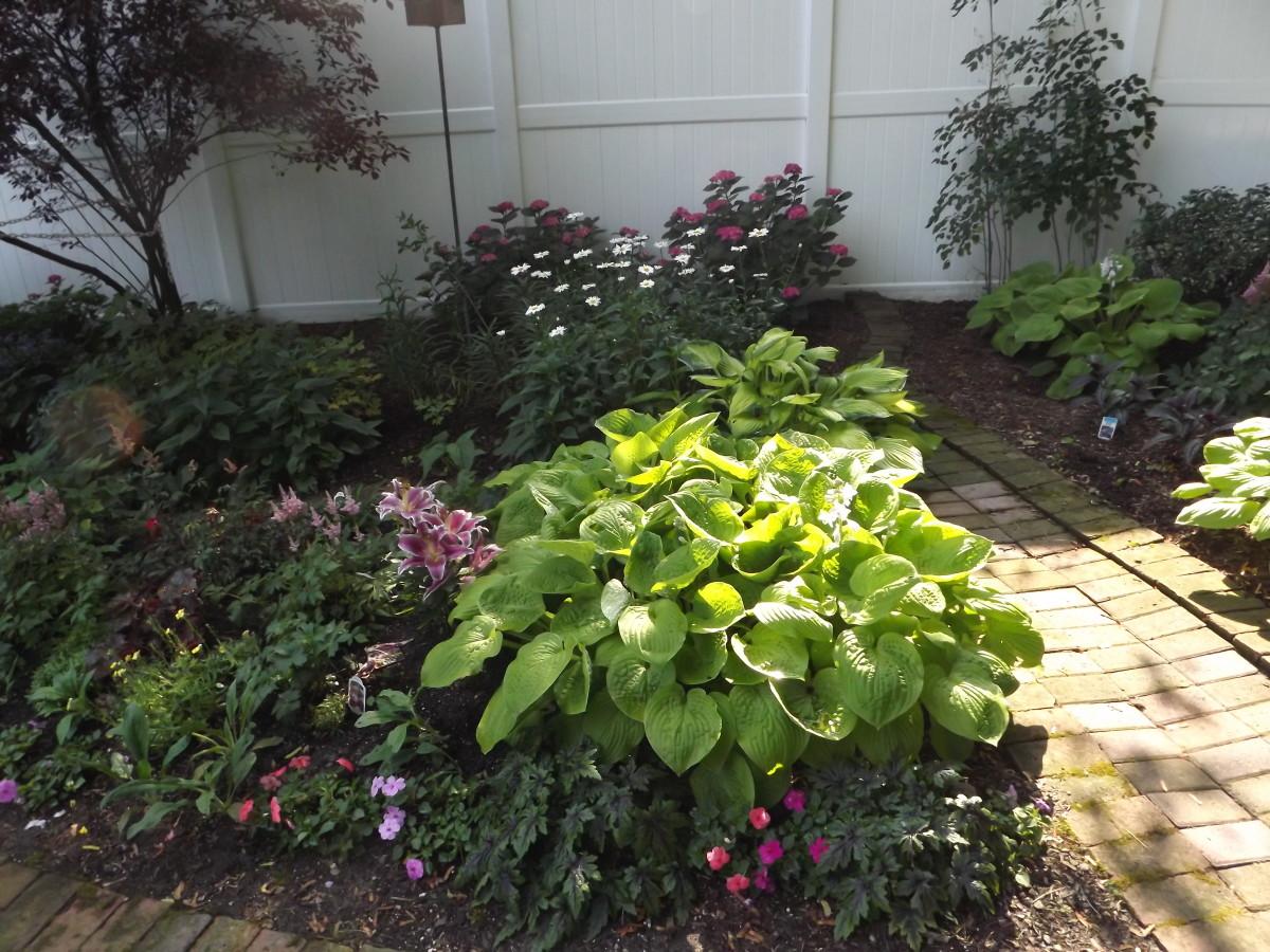 Hostas look nice in a shade garden.