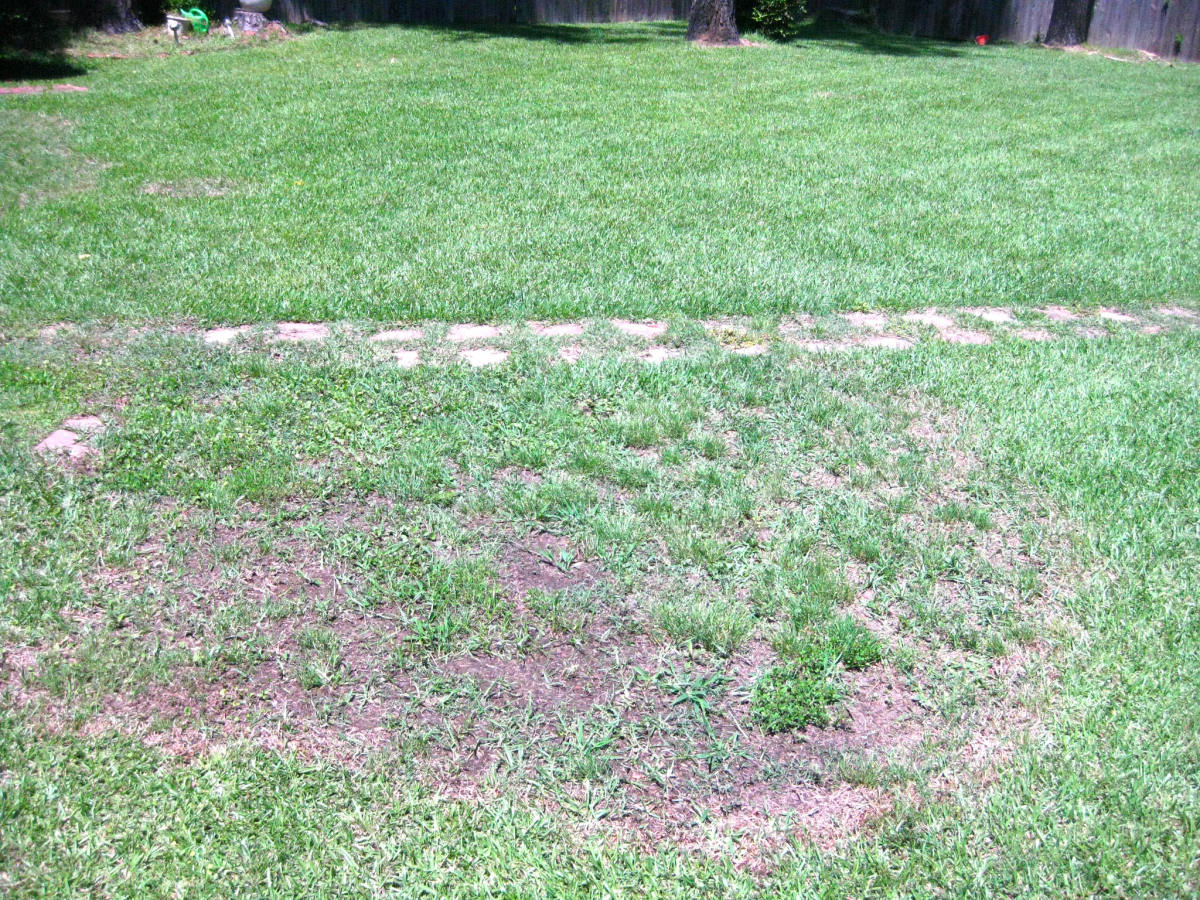 One of the brown patch areas spreading in my back yard