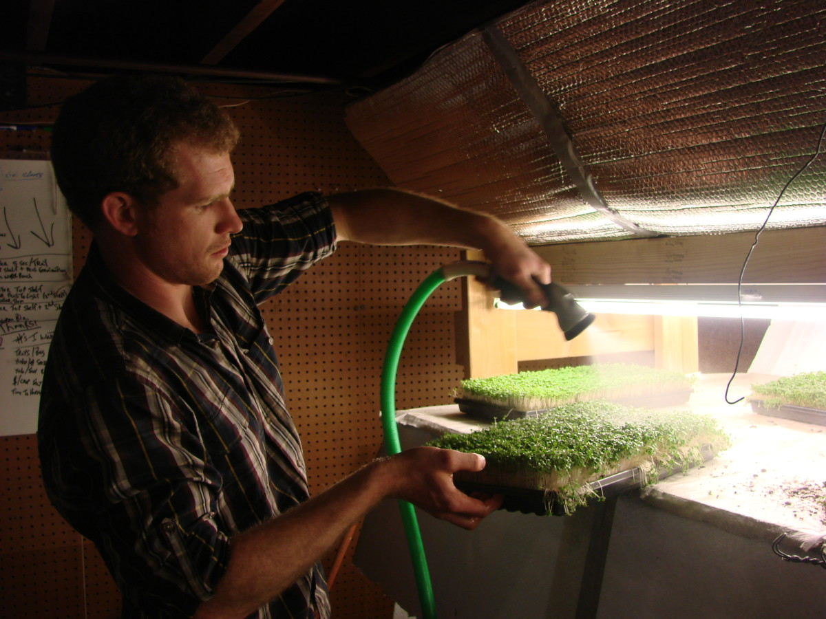 Micro greens require frequent watering.