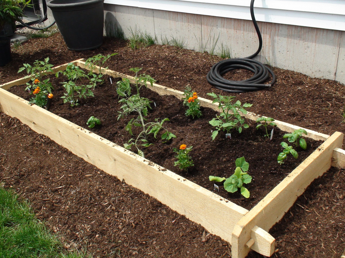 White cedar raised beds are not treated with chemicals, are naturally insect resistant, and hold up well for many years.