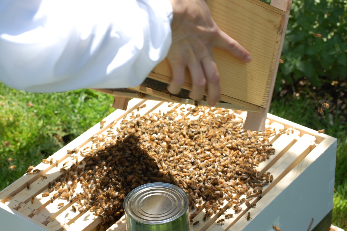Bee installation
