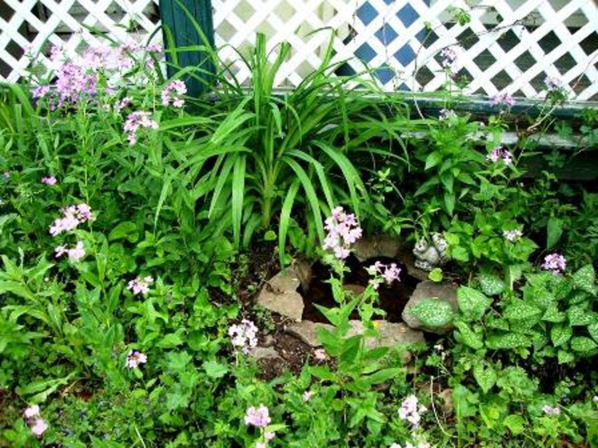 Pink Phlox adds a touch of whimsy. And my little pond looked like it had always lived there.
