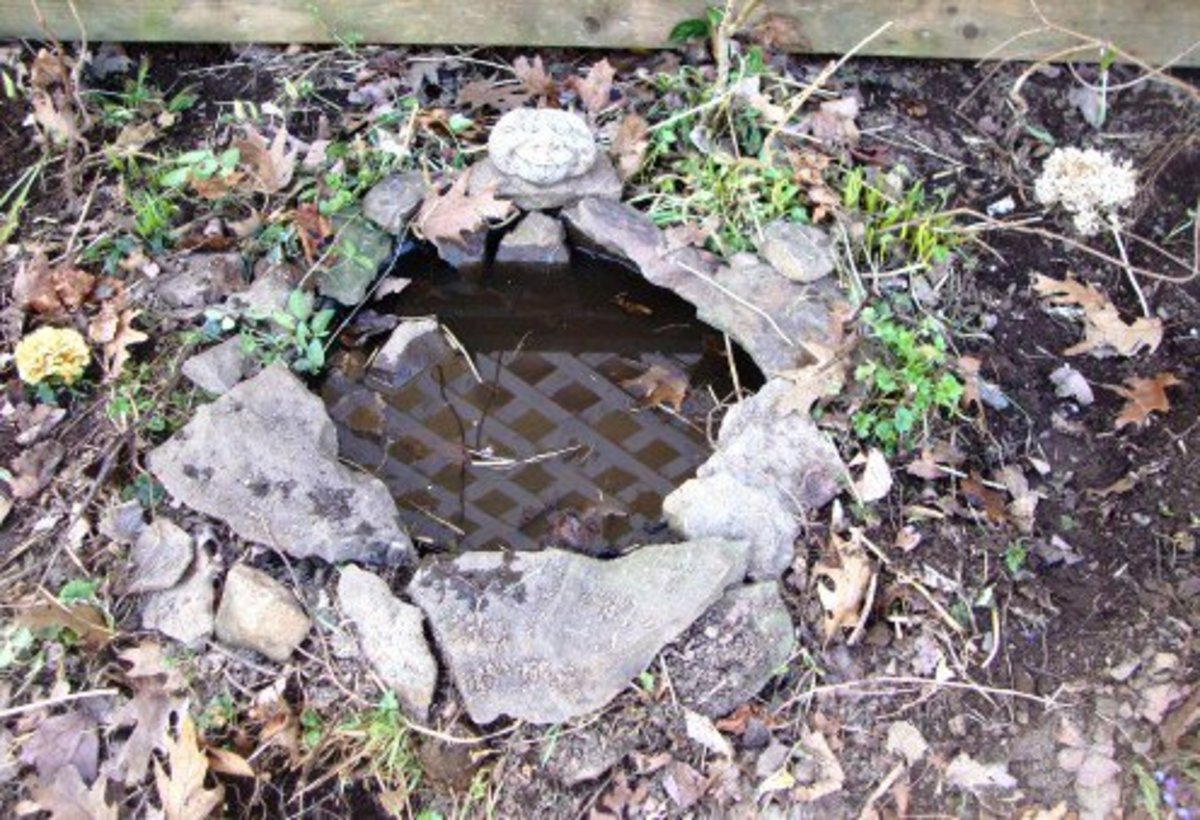 This pond was as easy as digging a small hole, upending and positioning the lid, and filling it with water.
